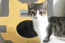 Austrotherm'den Kediler Üşümesin Diye Isı Yalıtımlı Kedi Evleri